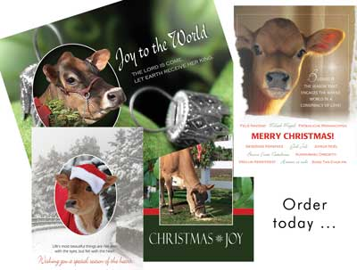 Jersey Christmas Cards